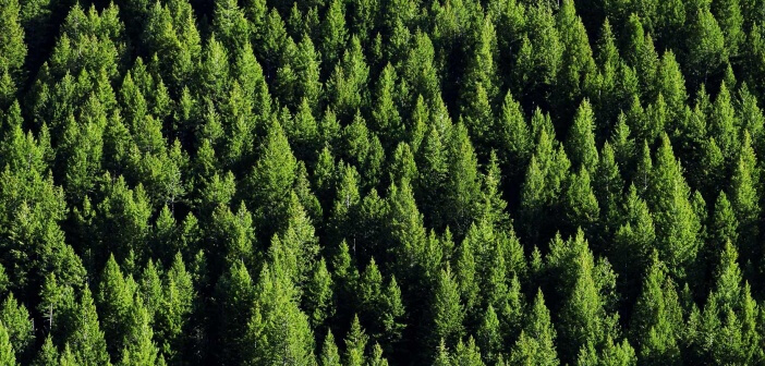 FORESTE SUI MONTI E SMOG SU FIRENZE